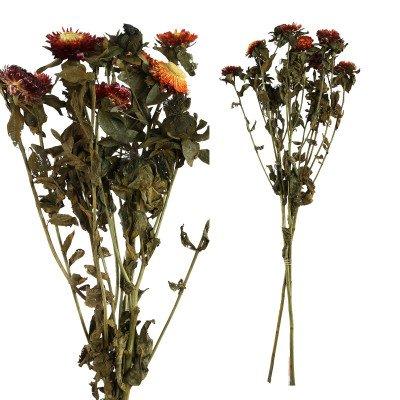 Firawonen.nl Ptmd gedroogde bloem rood tuinbloemenstruik