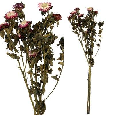 Firawonen.nl Ptmd gedroogde bloem paars tuinbloemenstruik