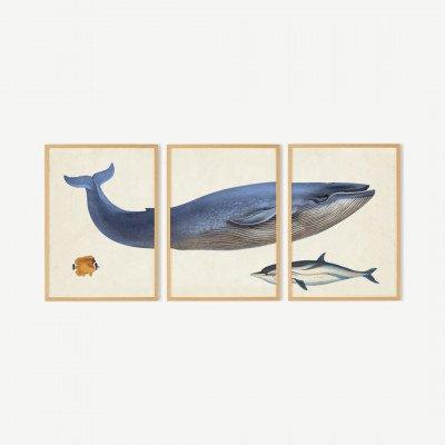 MADE.COM Natural History Museum, 'Vintage Whale, set van 3 ingelijste prints (meer formaten beschikbaar)