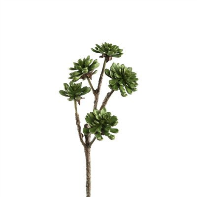 Firawonen.nl PTMD Succulent plant green aeonium spray