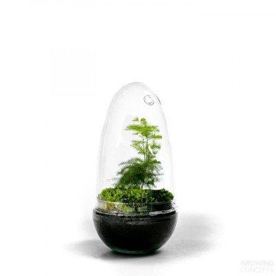 Growing Concepts Egg Medium - Asparagus 25cm / 12cm / Asparagus