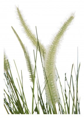 J-Line J-Line Kunstplant 'Grass' 114cm