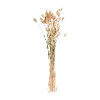 Xenos Lagurus - naturel - 60 cm