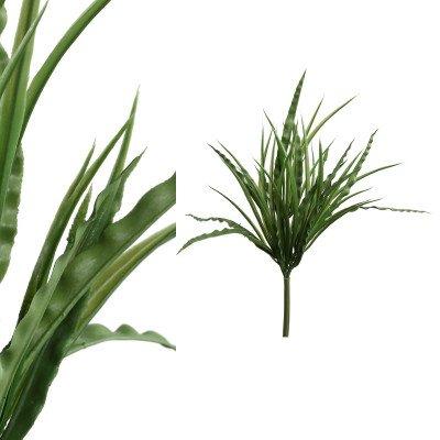 Firawonen.nl Ptmd leaves plant groen gras struik