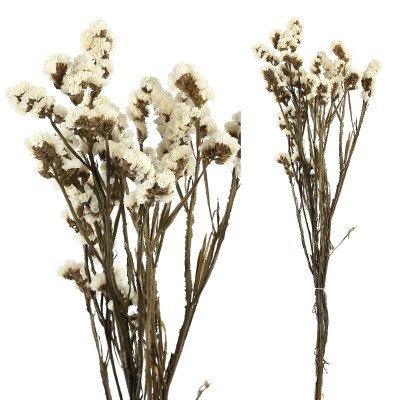 Firawonen.nl Ptmd gedroogde bloem wit vergeet me niet