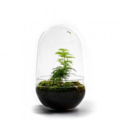 Growing Concepts Egg Large - Asparagus 30cm / 17cm / Asparagus