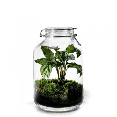 Growing Concepts Jar Large - Calathea 30cm / 17cm / Botanisch