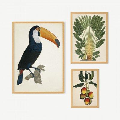 MADE.COM Natural History Museum, 'Toco Toucan', galeriemuur, set van 3 ingelijste prints