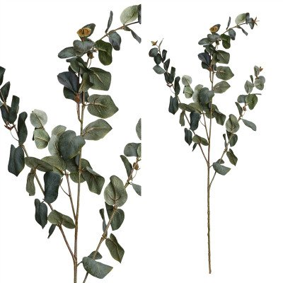 Firawonen.nl PTMD leaves plant groen grijs eucalyptus tak