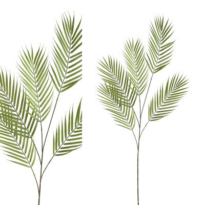 Firawonen.nl PTMD leaves plant groen palm blad tak