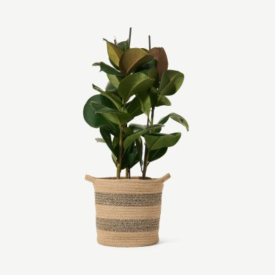 MADE.COM Bloombox Club rubberplant Robusta met mand