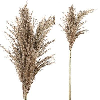 Firawonen.nl Ptmd gedroogde bladeren bruin natuurlijk pampas