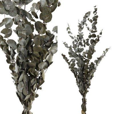 Firawonen.nl Ptmd gedroogde bladeren groen eucalyptusbladeren