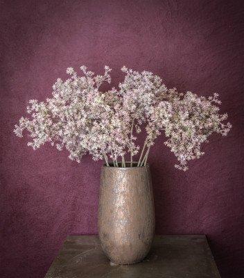 Firawonen.nl PTMD twig plant bruin osmanthus tak