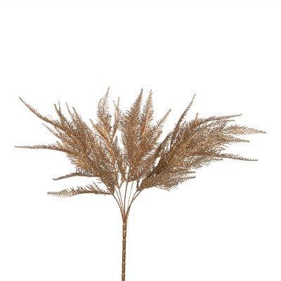 Firawonen.nl Fern Plant gold lace fern bush