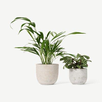 MADE.COM Bloombox Club set van 2 planten met potten
