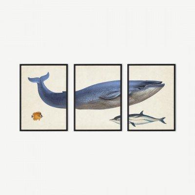 MADE.COM Natural History Museum, 'Vintage Whale, set van 3 ingelijste prints, A3