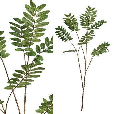 Firawonen.nl PTMD leaves plant licht groen salix blad tak