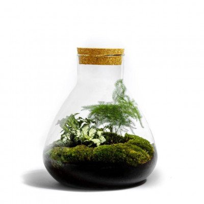 Growing Concepts Erlenmeyer Medium - Botanisch 26cm / 22cm / Botanisch