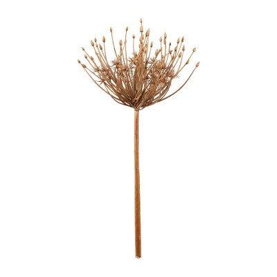 Xenos Allium grote knoppen - 53 cm