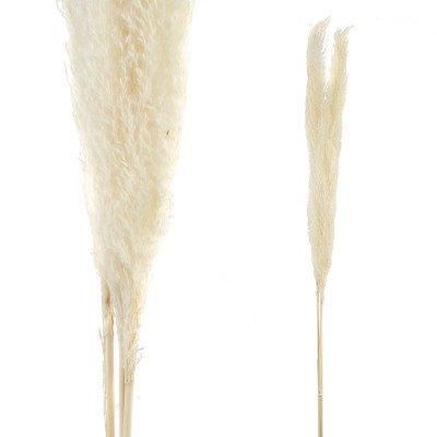 Firawonen.nl Ptmd gedroogde bladeren wit natuurlijk pampas gras