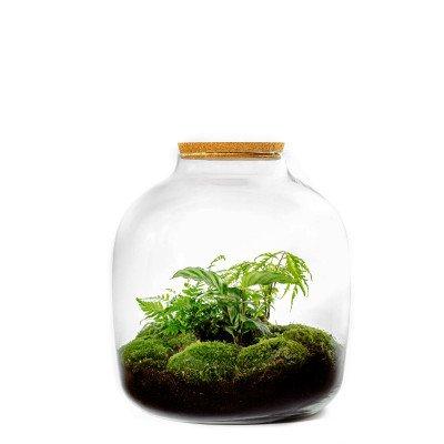 Growing Concepts Hebe Cork 38cm / 34cm / Botanisch