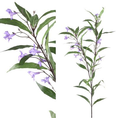 Firawonen.nl Garden flower green ruellia stem purple flowers