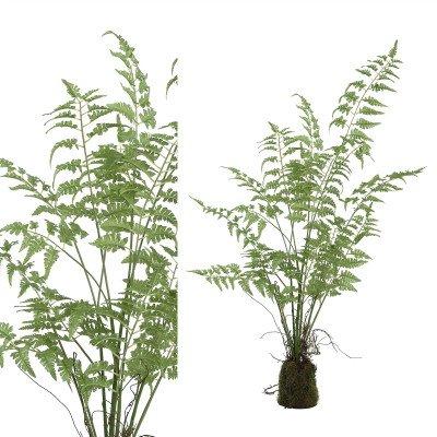 Firawonen.nl PTMD fern plant groen asparagus plant in kluit