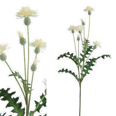 Firawonen.nl PTMD Thistle plant cream thistle spray