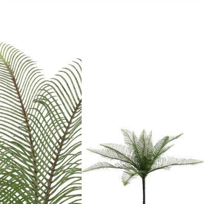 Firawonen.nl PTMD fern plant groen bladeren struik