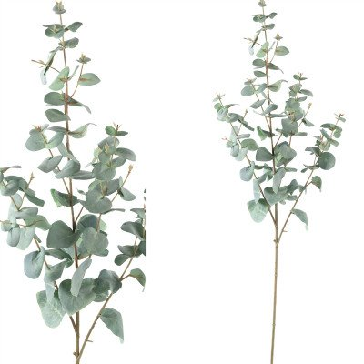 Firawonen.nl PTMD Leaves plant green eucalyptus spray high