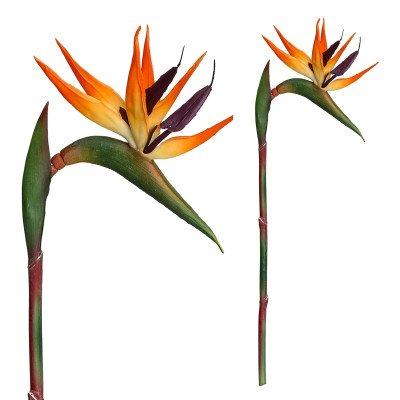 Firawonen.nl PTMD garden bloem oranje bird paradijsvogelbloem