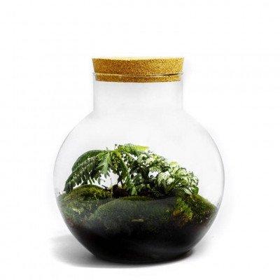 Growing Concepts Bolder - Biophytum 30cm / 18cm / Biophytum