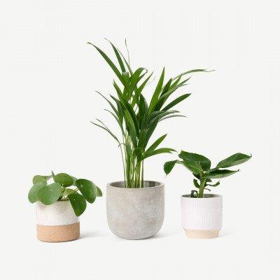 MADE.COM Bloombox Club Pet-Friendly 3 planten Bundle met potten, meerkleurig