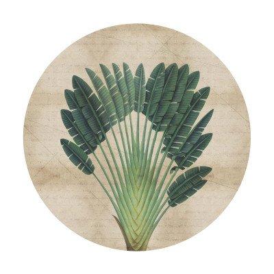 Growing Concepts Dana Circle- Tropical Botanicals II