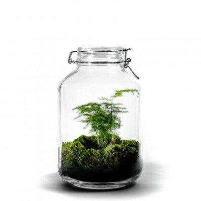 Growing Concepts Jar Large - Asparagus 30cm / 17cm / Asparagus