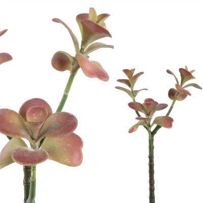Firawonen.nl PTMD Succulent plant pink kalanchoe spray
