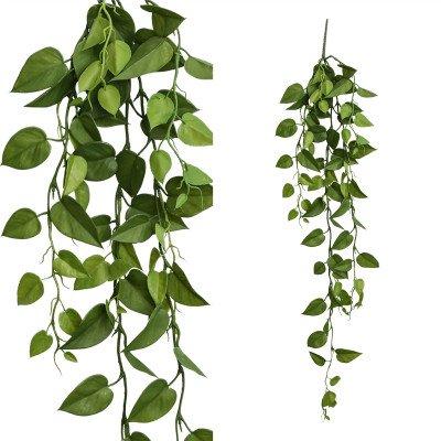Firawonen.nl PTMD Leaves plant green hanging pothos bush