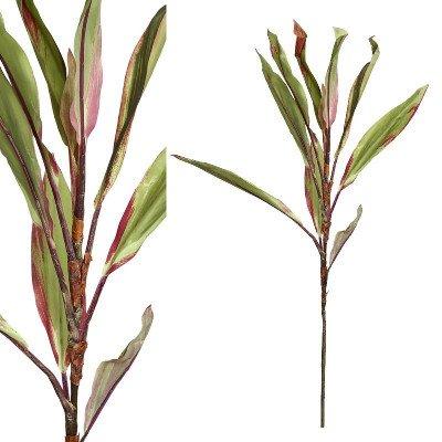 Firawonen.nl PTMD leaves plant groen rood cordyline tak