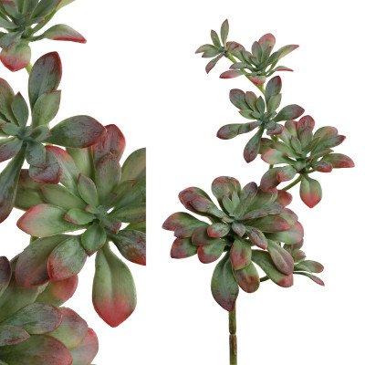 Firawonen.nl Ptmd succulent plant groen rood hangende succulent