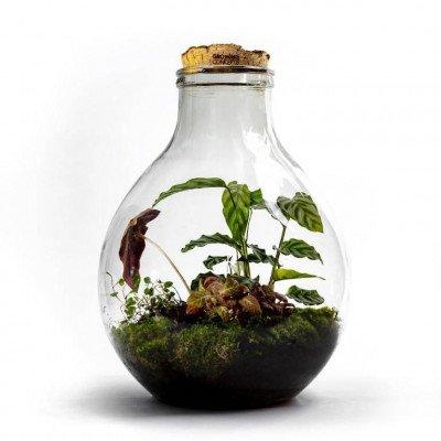 Growing Concepts EcoCork XL 47cm / 32cm / Botanisch