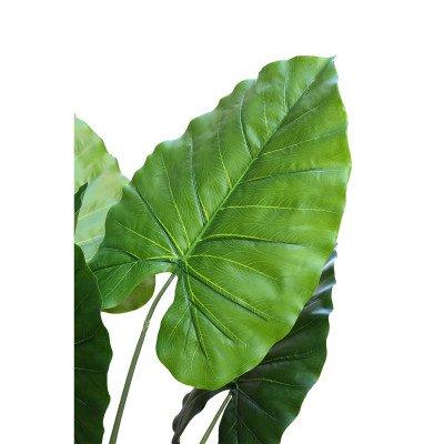 Firawonen.nl PTMD Tree groene syngonium podophyllum in plastic pot