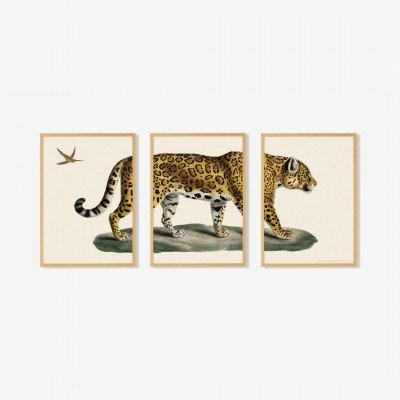 MADE.COM Natural History Museum, 'Vintage Jaguar', set van 3 ingelijste prints, A2