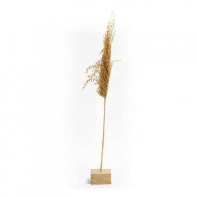 Growing Concepts Freya - Eiken standaard met 1 droogbloem 8cm / 55cm / Droogbloemen