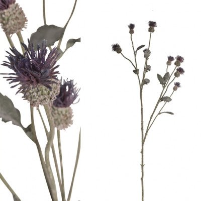 Firawonen.nl PTMD thistle plant groen paarse distel tak met