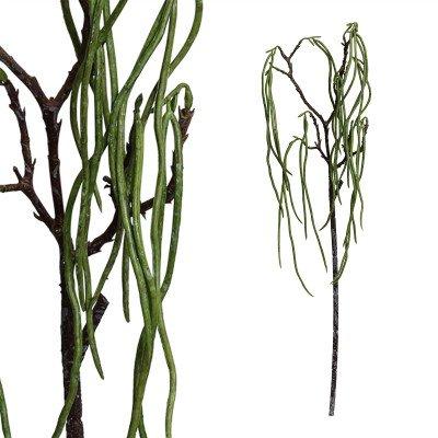 Firawonen.nl PTMD leaves plant groen asparagus tak