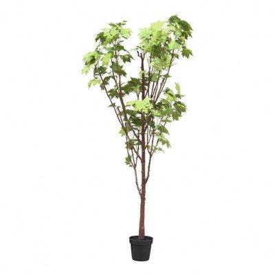 Firawonen.nl PTMD Tree maple leaf tree in black pot
