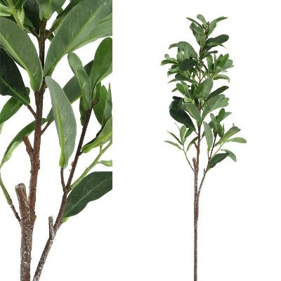 Firawonen.nl PTMD leaves plant groen cauliflaager blads tak