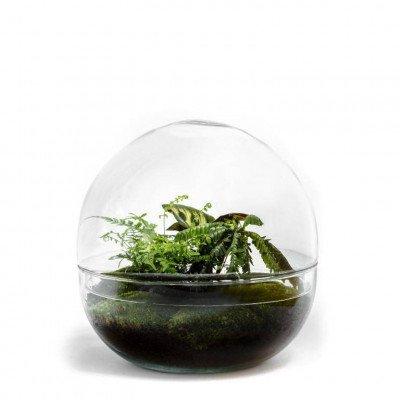 Growing Concepts Biodome - Biophytum 30cm / 30cm / Biophytum