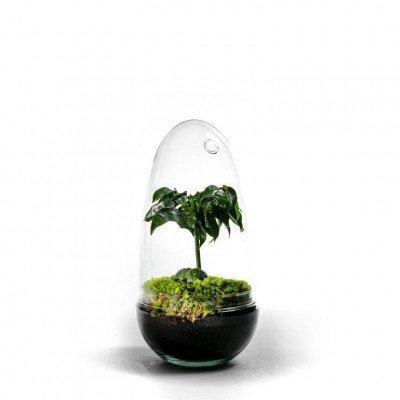 Growing Concepts Egg Medium - Castanospermum 25cm / 12cm / Castanospermum